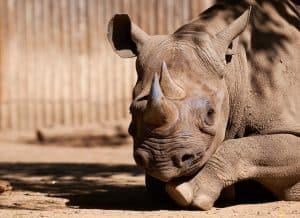 Patron at Cincinnati Ohio Zoo Bitten by a Baby Rhinoceros